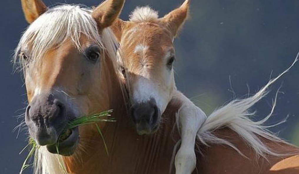 Nice Little Horse