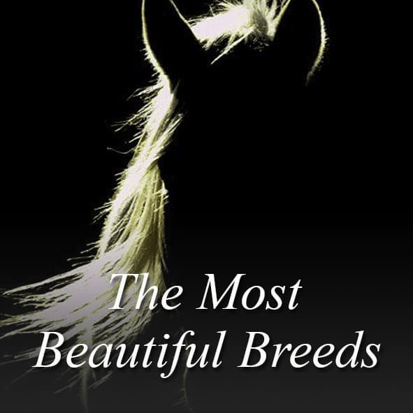 The Most Beautiful Breeds