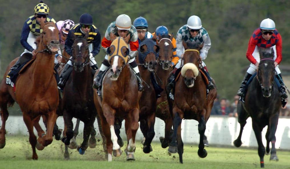 Club Horse Shop Le Classiche Italiane