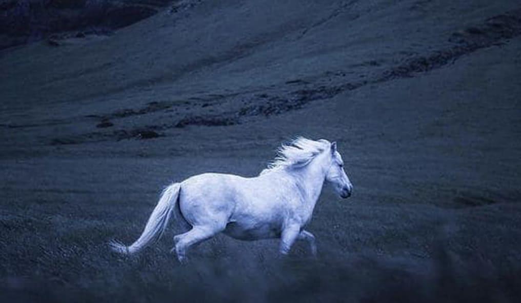 White Horse Earrings