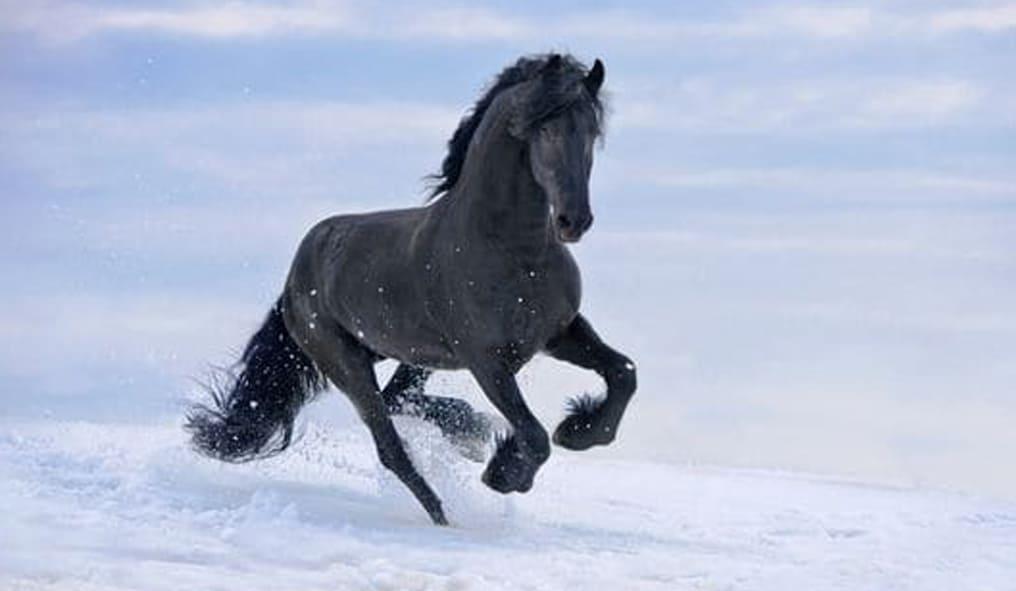 black horse paper bracelet
