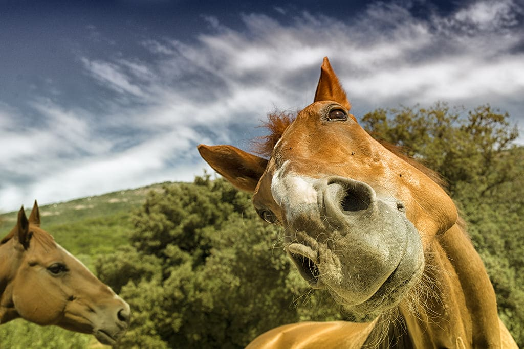 Discover Club Horse