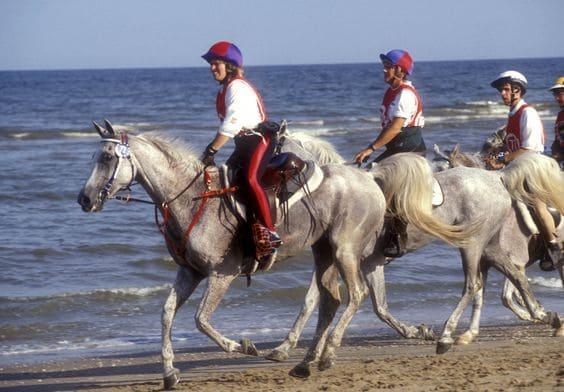 Endurance riding 2