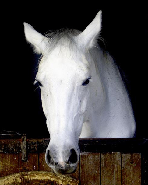 Buy a horse white horse