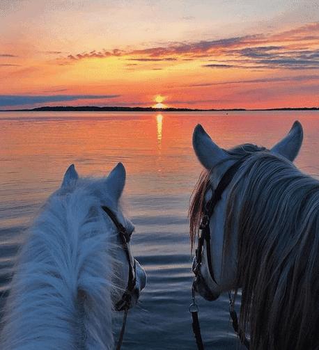 Buy a horse sunrise