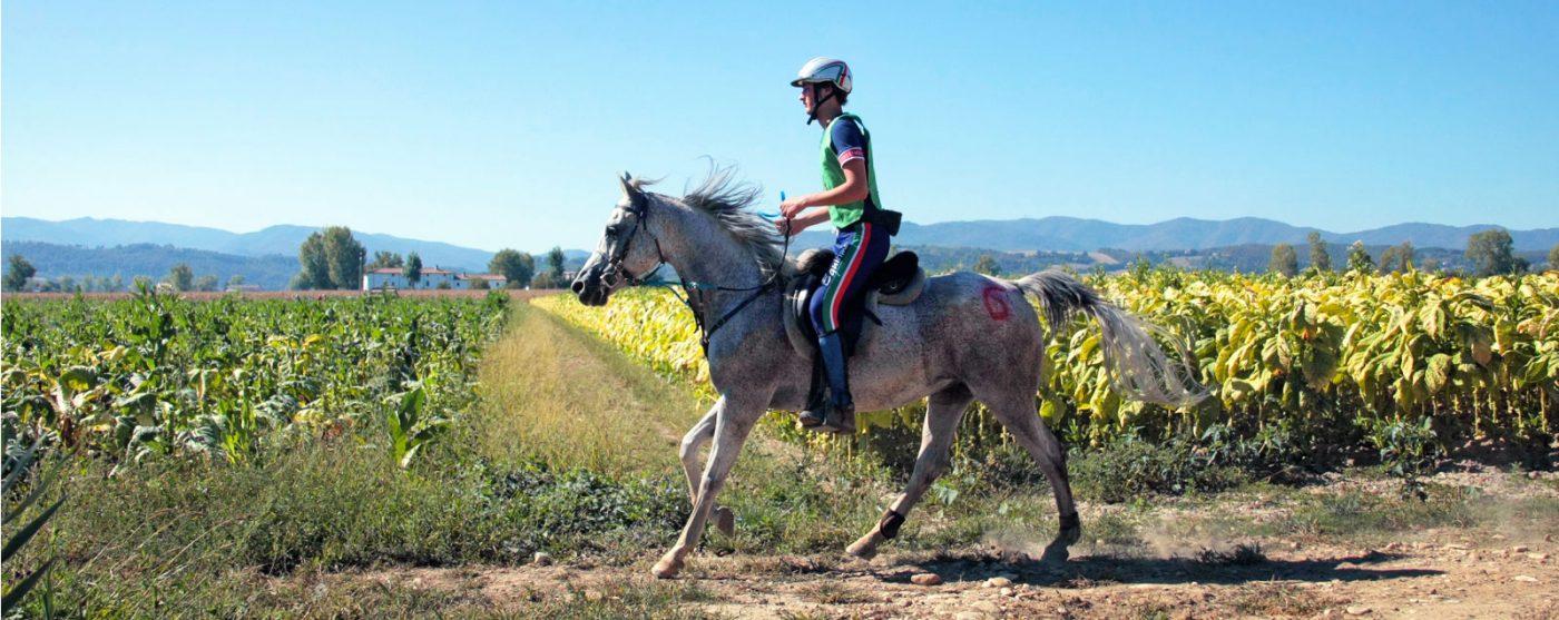 Endurance riding 9