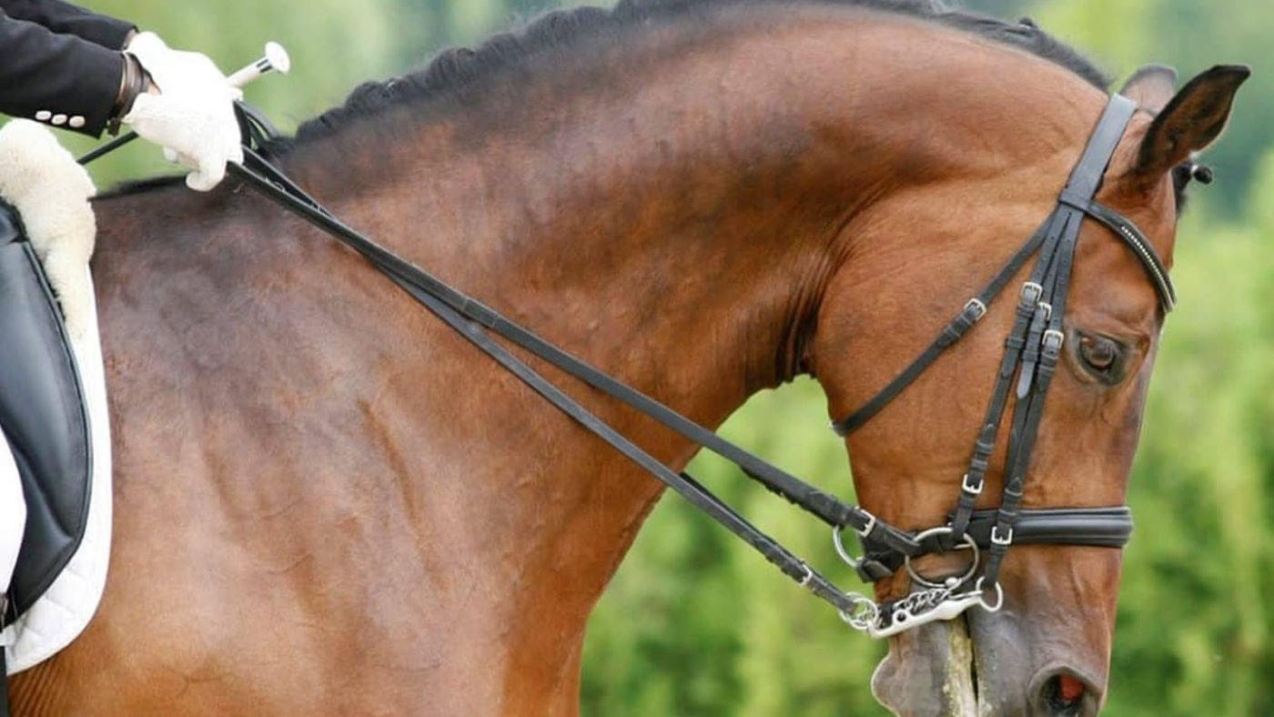 Horse Riding Dressage