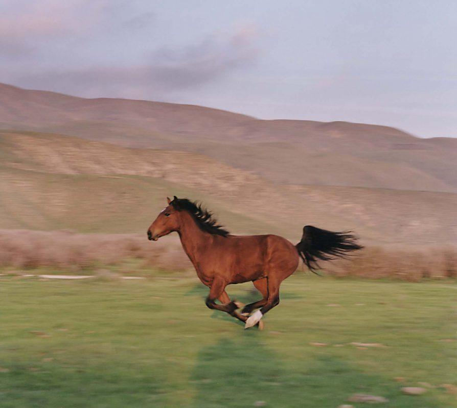 Mustang Horse 14