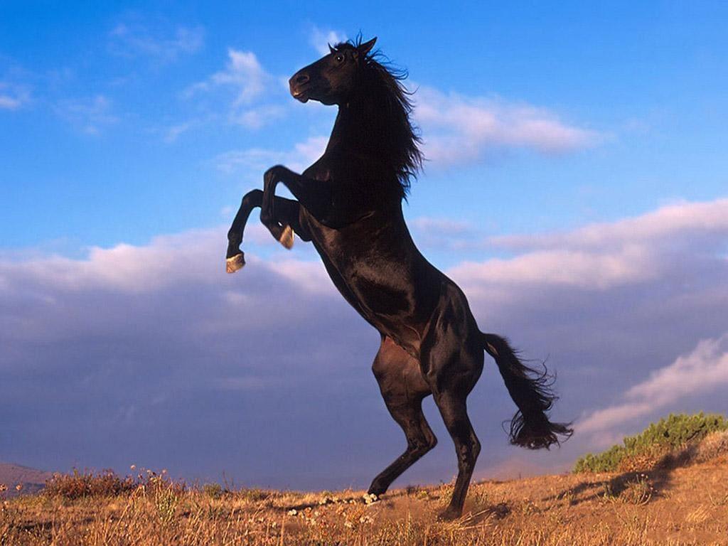 Mustang Horse 16