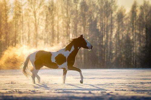 Paint Horse Fog