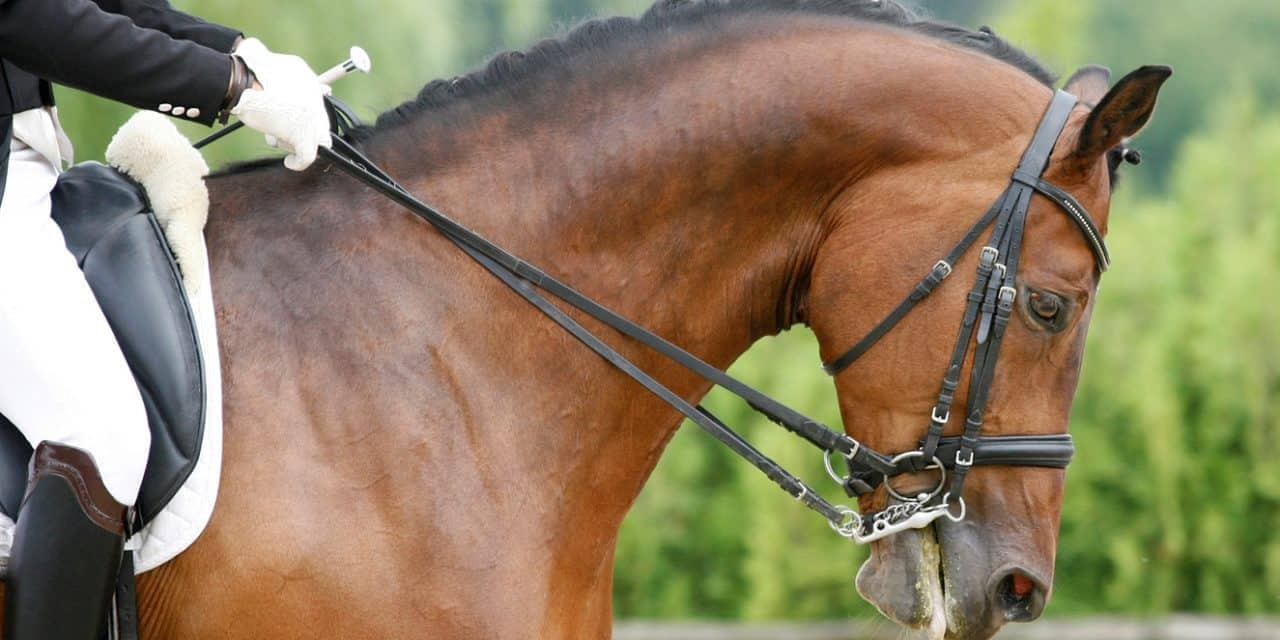 How to be perfect on horseback dressage