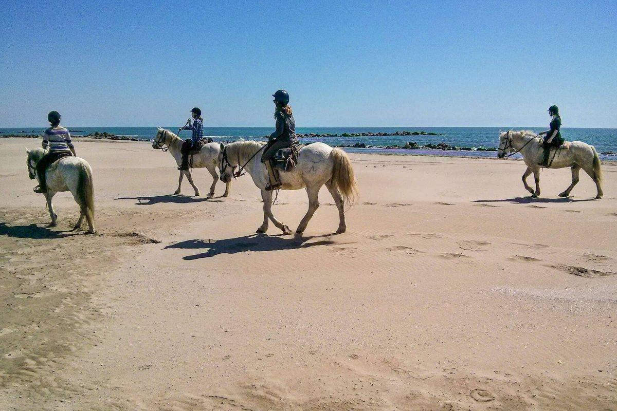 Horseback Riding in Camargue 3