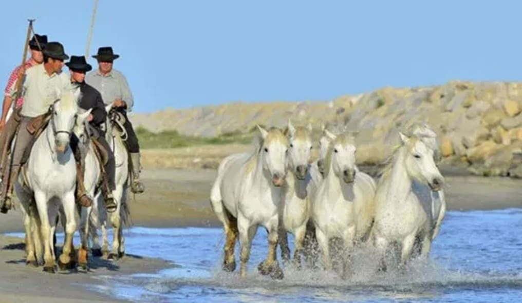 Horseback Riding in Camargue The Guardian