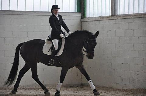 Dressage Cavallo Olandese