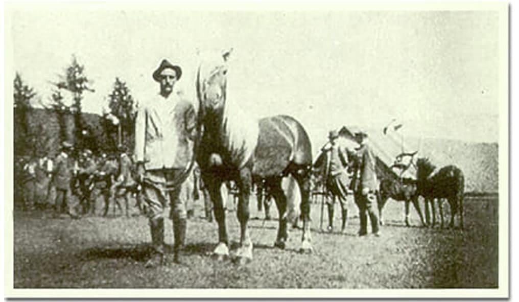 Haflinger horse storica