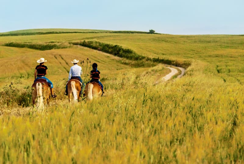 Horseback Riding in Matera sulla via del Grano