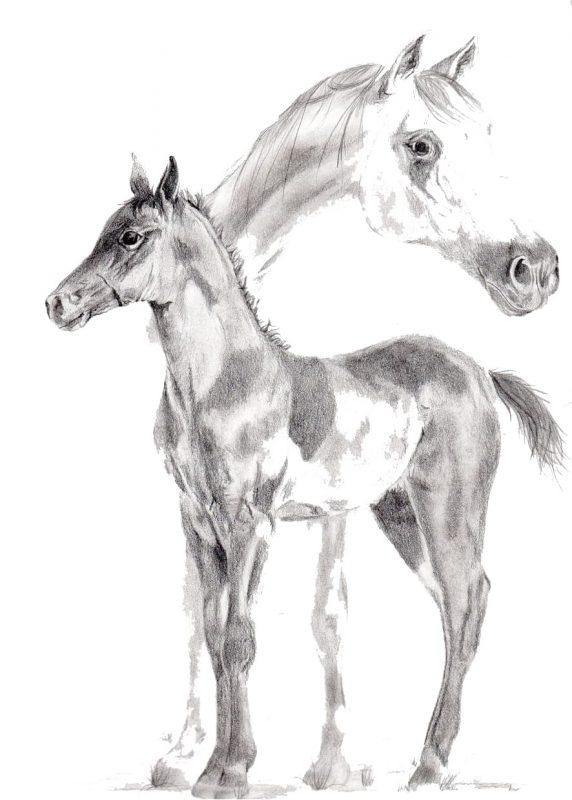 Unisex T-Shirt with Arabian Horse - site