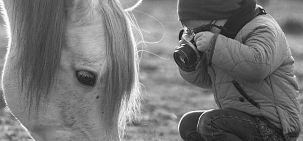 Contest photograph your horse