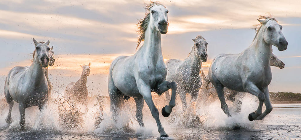 National horse day in Italy