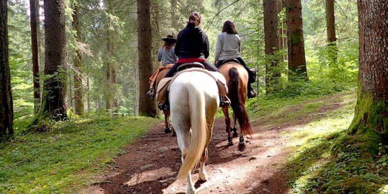 Horseback Riding in Madonna di Campiglio Estate